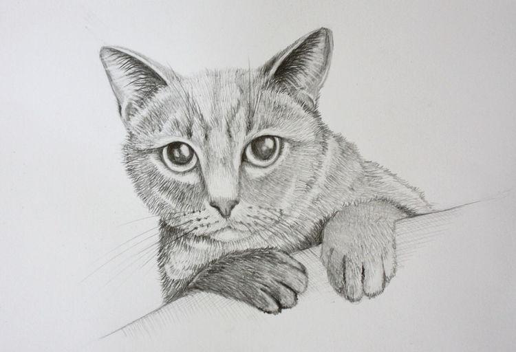 Tierzeichnung, Bleistiftzeichnung, Katze, Zeichnungen