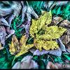 Herbst, Natur, Fotografie, Digitale kunst