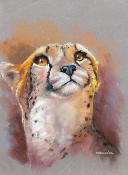 Gepard, Tierwelt, Orange, Afrika, Fell, Katze