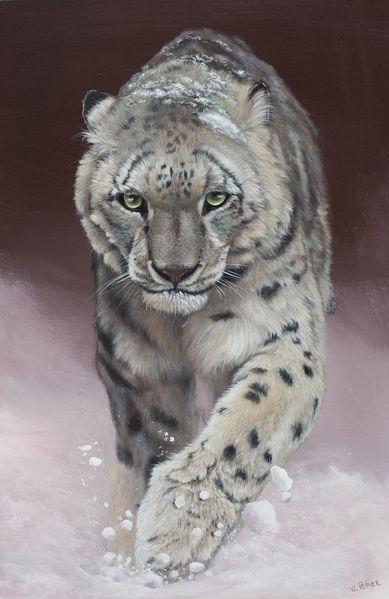 Raubtier, Augen, Schneeleopard, Großkatze, Schnee, Leopard