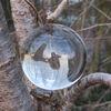 Glaskugel, Fotografie, Natur, Kugel