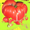 Tomate, Mutant, Digitale kunst, Natur
