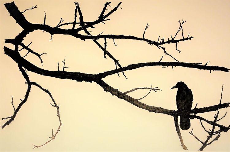 Vogel, Äste, Monochrom, Zeichnungen, Abend