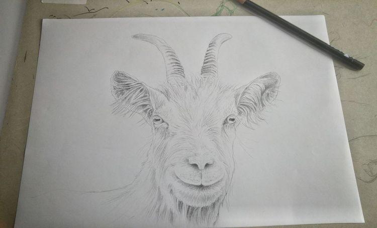 Bleistiftzeichnung, Ziegen, Zeichung, Bock, Zeichnungen, Tiere