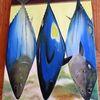 Markt, Fisch, Thunfisch, Malerei