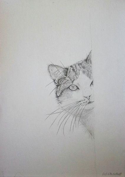 Neugier, Blick, Bleistiftzeichnung, Katze, Zeichnungen, Ecke