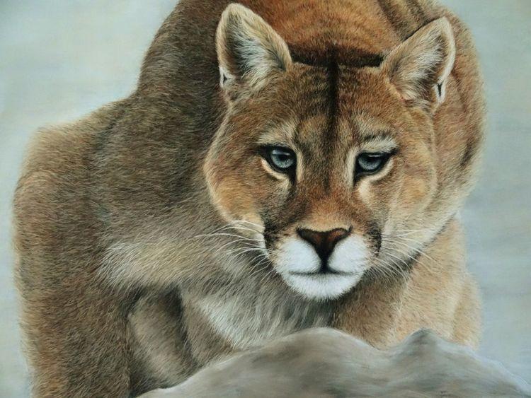 Tierwelt, Pastellmalerei, Pumas pastels, Freiheit, Zeichnungen, Puma