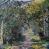 Birken, Sonne, Baum, Schatten