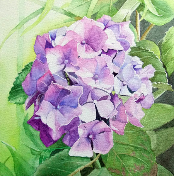 Hortensien, Lila, Aquarellmalerei, Pflanzen, Aquarell, Blätter