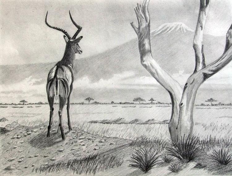Savanne, Antilope, Baum, Impalla, Kilimandscharo, Zeichnungen