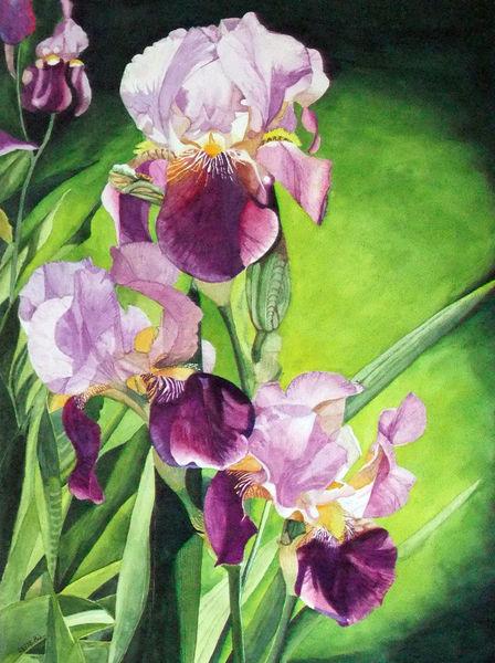 Blumen, Aquarellmalerei, Pflanzen, Iris, Aquarell, Blätter