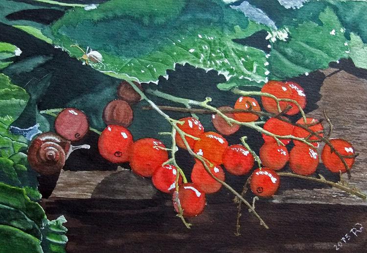 Rot, Schnecke, Johannisbeeren, Grün, Aquarellmalerei, Blätter