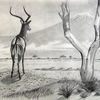 Antilope, Baum, Impalla, Kilimandscharo