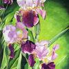 Blumen, Aquarellmalerei, Pflanzen, Iris