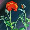 Klatschmohn, Knospe, Mohn, Blüte