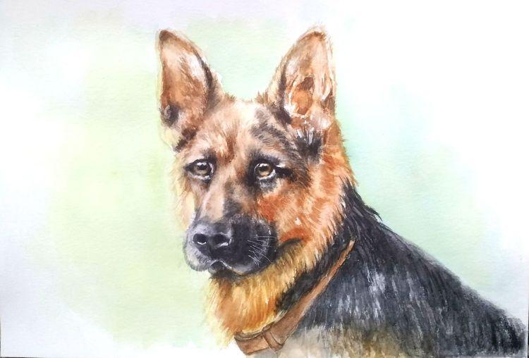 Hund, Tierportrait, Deutscher schäferhund, Hundeportrait, Aquarellmalerei, Tiere