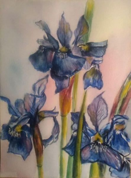 Iris, Aquarellmalerei, Pflanzen, Blau, Blumen, Natur