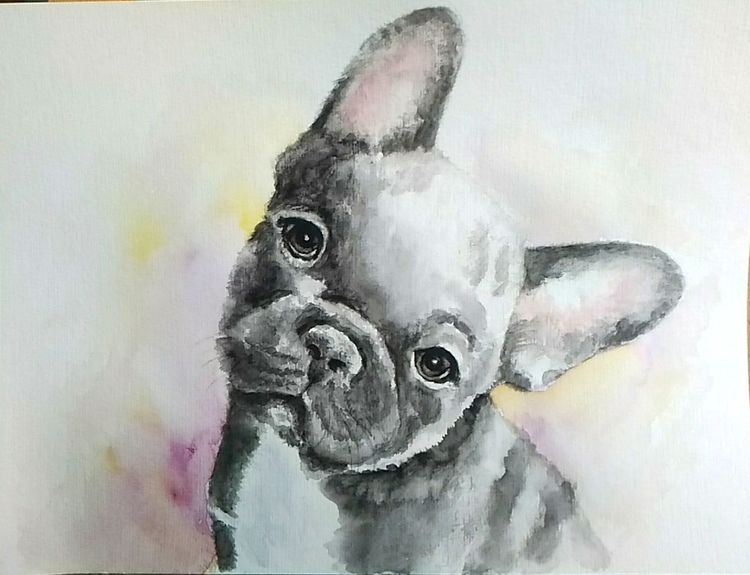 Tiere, Hund, Hundeportrait, Französische bulldogge, Aquarellmalerei, Aquarell