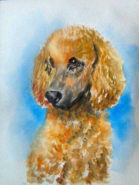 Aquarell tiere, Tierportrait, Hundeportrait, Tiere, Pudel, Hundeblick