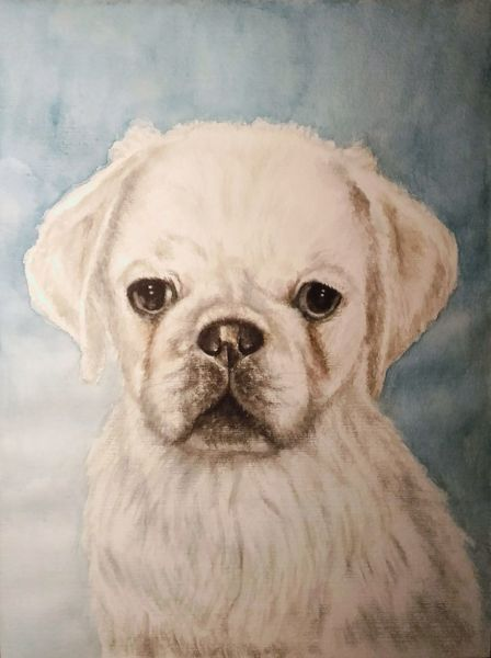 Hund, Aquarellmalerei, Tierportrait, Hundeportrait, Tiere, Mops