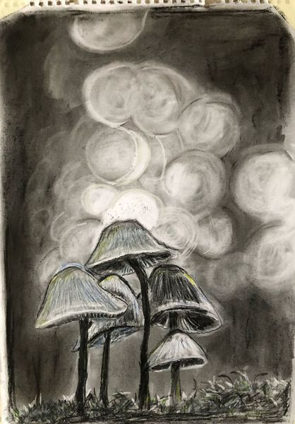 Zauber, Bleistift und kohle, Pilze, Zeichnungen