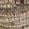 Baumrinde, Palmen, Abstrakt, Fotografie
