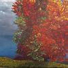Kontrast, Natur, Freiheit, Baum