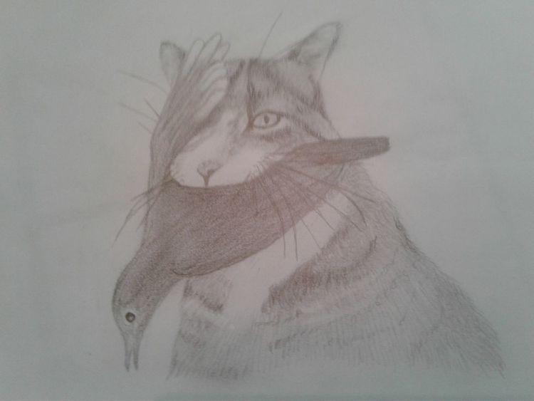 Vogel, Skurril, Bleistiftzeichnung, Katze, Zeichnungen