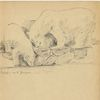 Ca siebziger jahre, Leipziger zoo, Martha krug, Zeichnungen