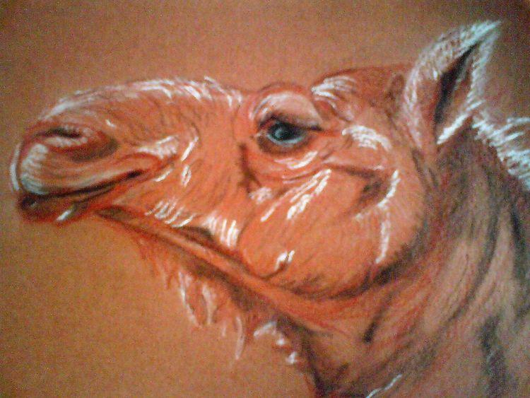 Oman, Kreide, Kamel, Zeichnungen