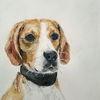 Beagle, Portrait, Aquarell