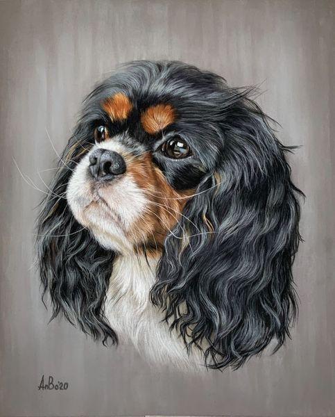 Tierportrait, Hund, Kavalier, Zeichnungen, Portrait, King