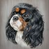Kavalier, Tierportrait, Hund, Zeichnungen