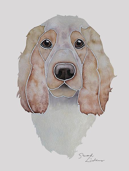 Hund, Hundeportrait, Nach fotovorlage, Malen, English cocker spaniel, Aquarellmalerei