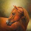 Pferde, Studie, Portrait, Fuchs