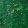 Urwald, Pflanzen, Farben, Wald