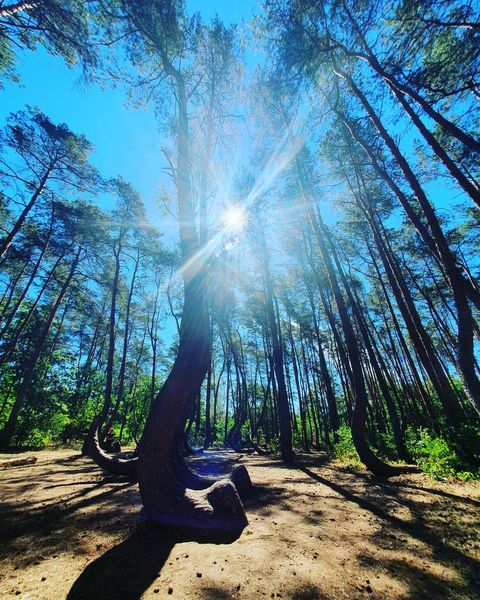 Wald, Licht, Baum, Fotografie