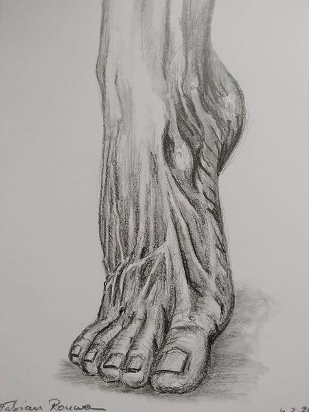 Fuß, Zehe, Fußmuskulatur, Zehenspitzen, Zeichnungen