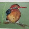Malerei, Vogel, Natur, Eisvogel