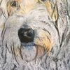 Pastellmalerei, Hund, Akita inu, Malerei