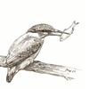 Eisvogel, Bleistiftzeichnung, Vogel, Zeichnungen
