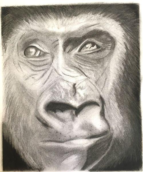 Gorilla, Kohlezeichnung, Schwarz, Weiß, Natur, Zeichnungen