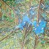 Blätter, Baum, Grün, Wipfel