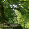Arboretum, Licht, Grün, Baum