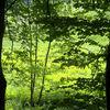 Grün, Licht, Farben, Fotografie