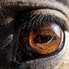 Pferde, Augen, Licht, Spiegelung