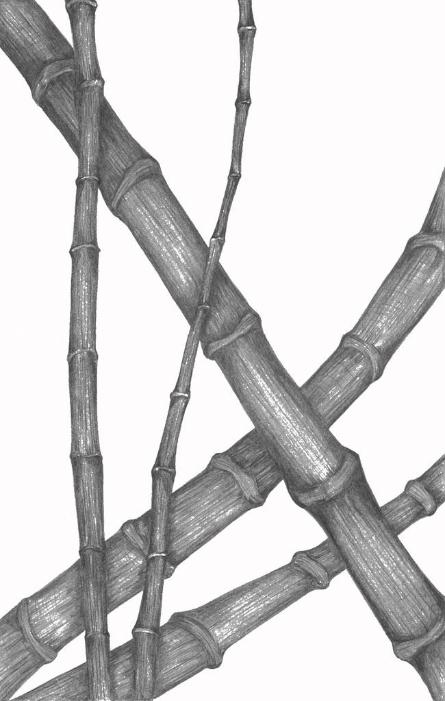 bild galerie zeichnungen bambus von katja bei kunstnet. Black Bedroom Furniture Sets. Home Design Ideas