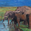 Steppe, Elefant, Tränke, Herd