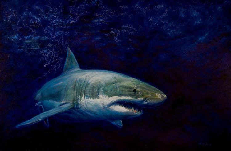 Tiermalerei, Tierportrait, Wasser, Tierwelt, Hai, Meer