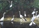 Reiher, Malerei, Landschaft, Wald
